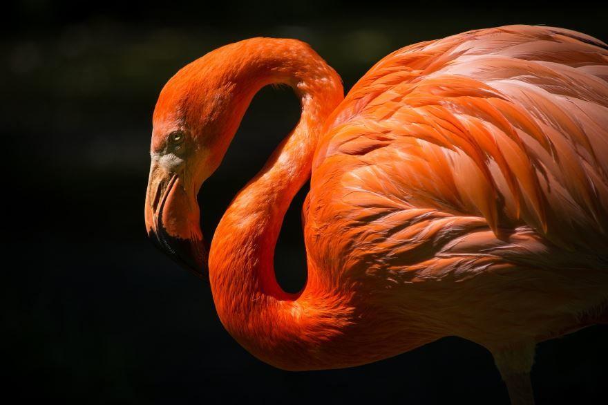 Скачать бесплатно картинки розового фламинго