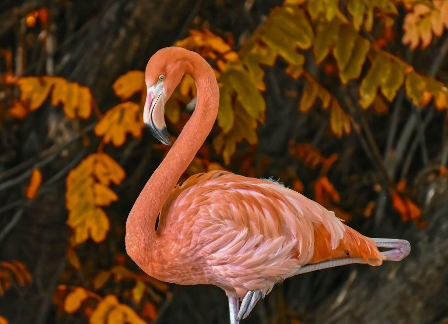 Розовый фламинго, смотреть фото онлайн в хорошем качестве