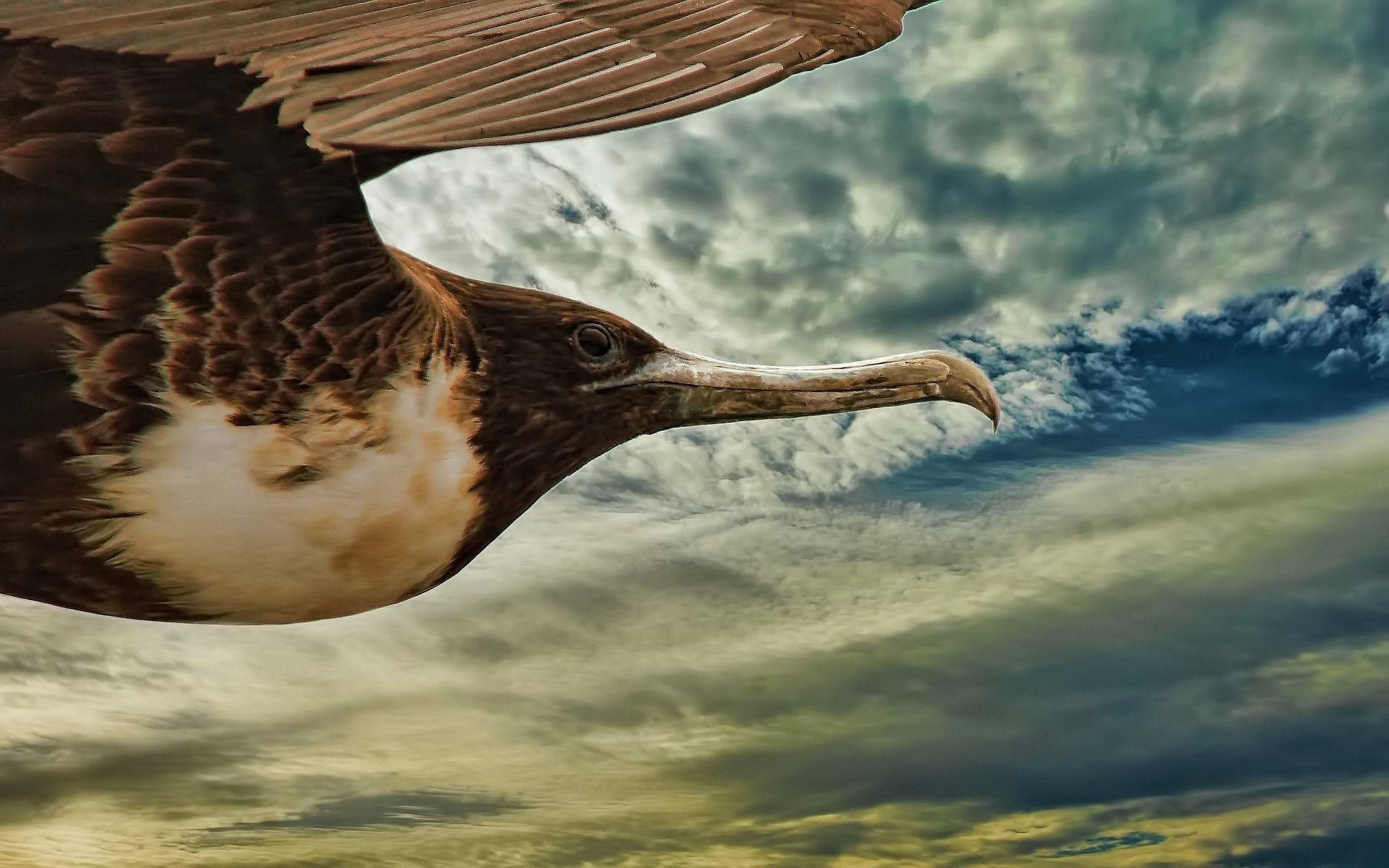 Смотреть красивую картинку фрегат на природе