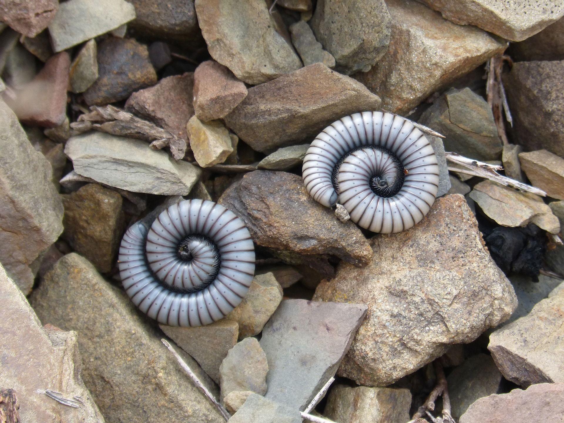 Фото необыкновенного червя бесплатно
