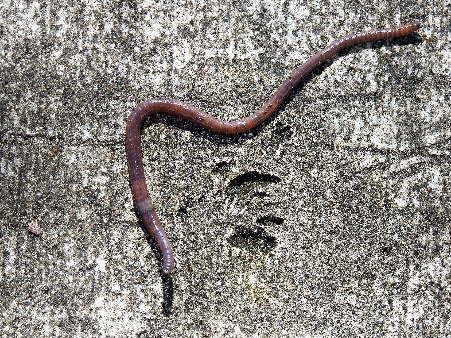 Смотреть картинку много червей