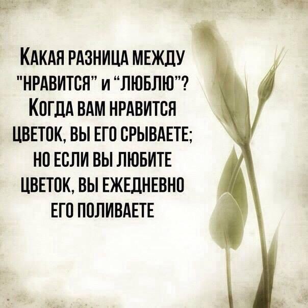 Цитата про любовь со смыслом