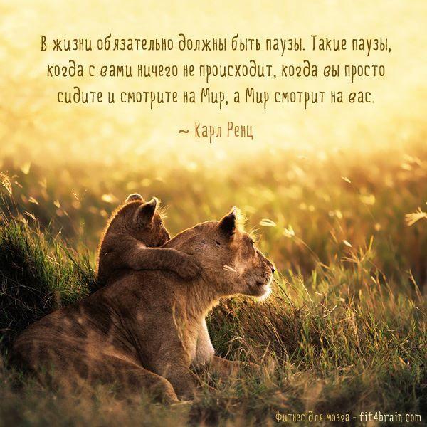Короткая цитата про смысл жизни человека
