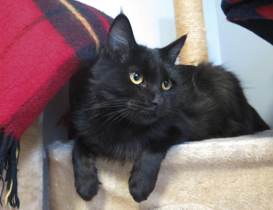 Милая картинка черной кошки бесплатно