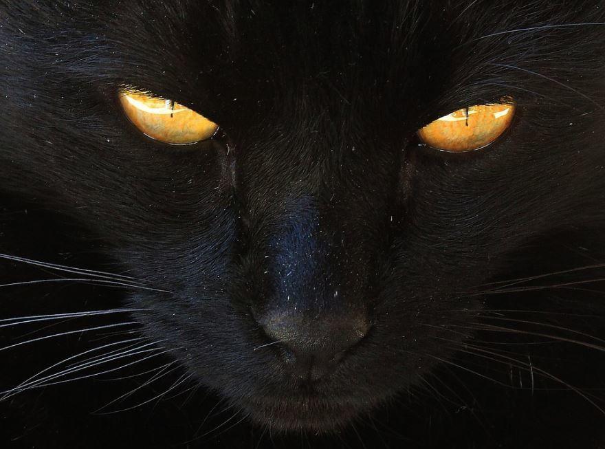 Прикольная картинка черной кошки бесплатно