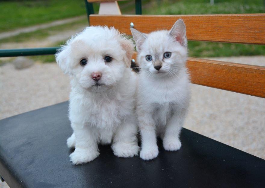 Картинки кошечки и собачки
