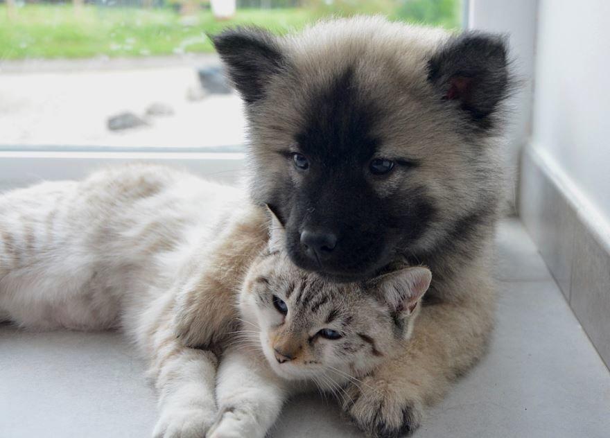 Скачать милые картинки кошки и собаки