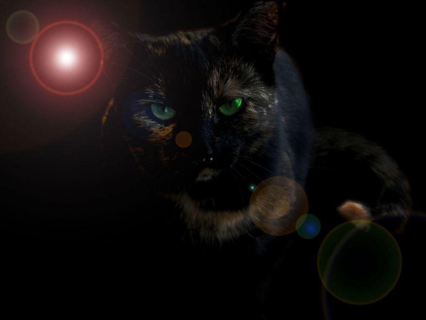 Скачать бесплатно картинку кошки на рабочий стол