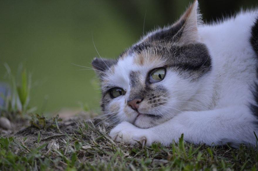 Смешные и прикольные картинки кошек