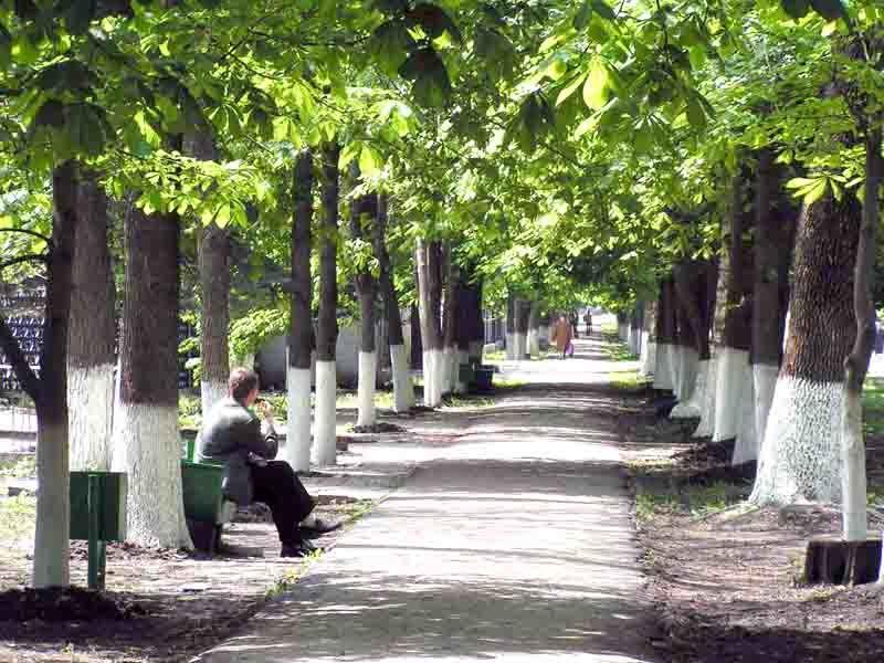 Смотреть лучшее фото города Зерноград красивая аллея
