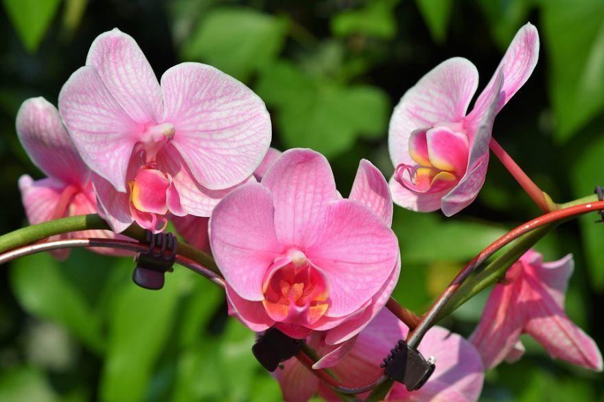 Смотреть фотографии орхидеи бесплатно
