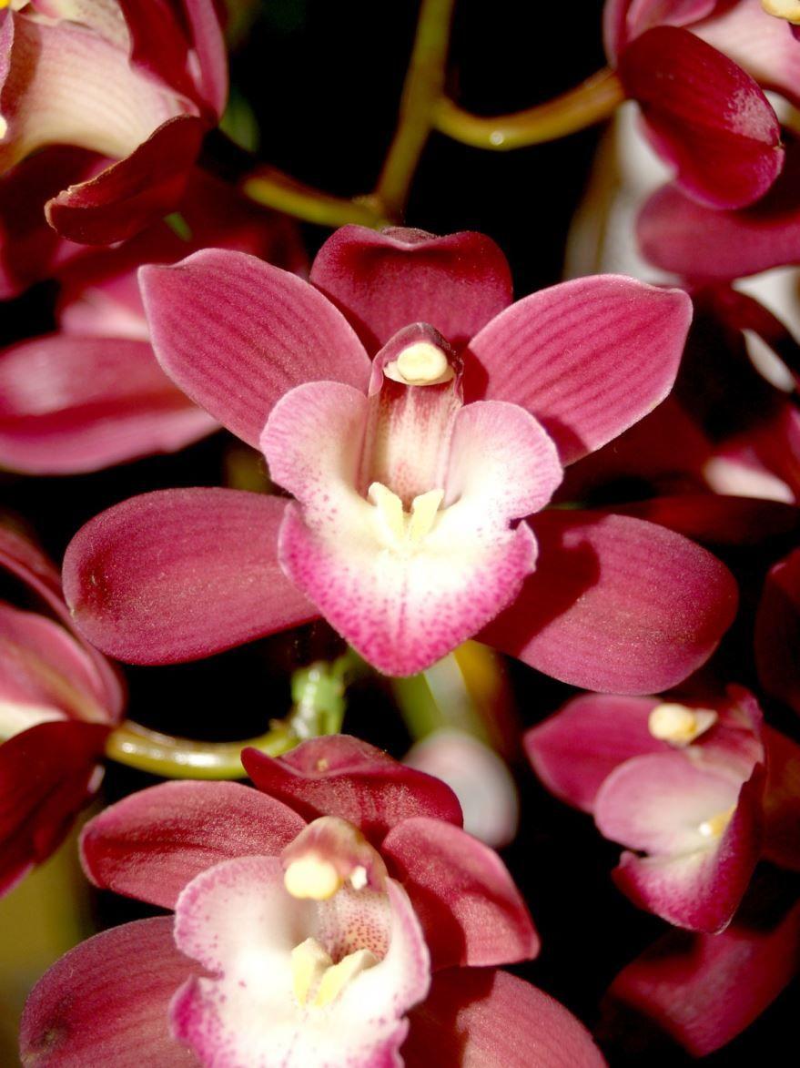 Смотреть бесплатно орхидеи в домашних условиях