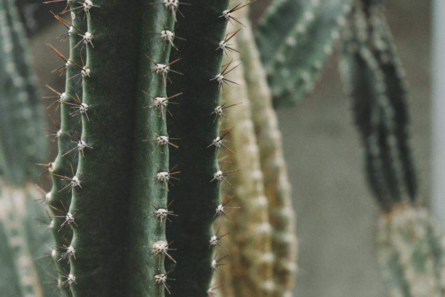 Картинки кактусов бесплатно