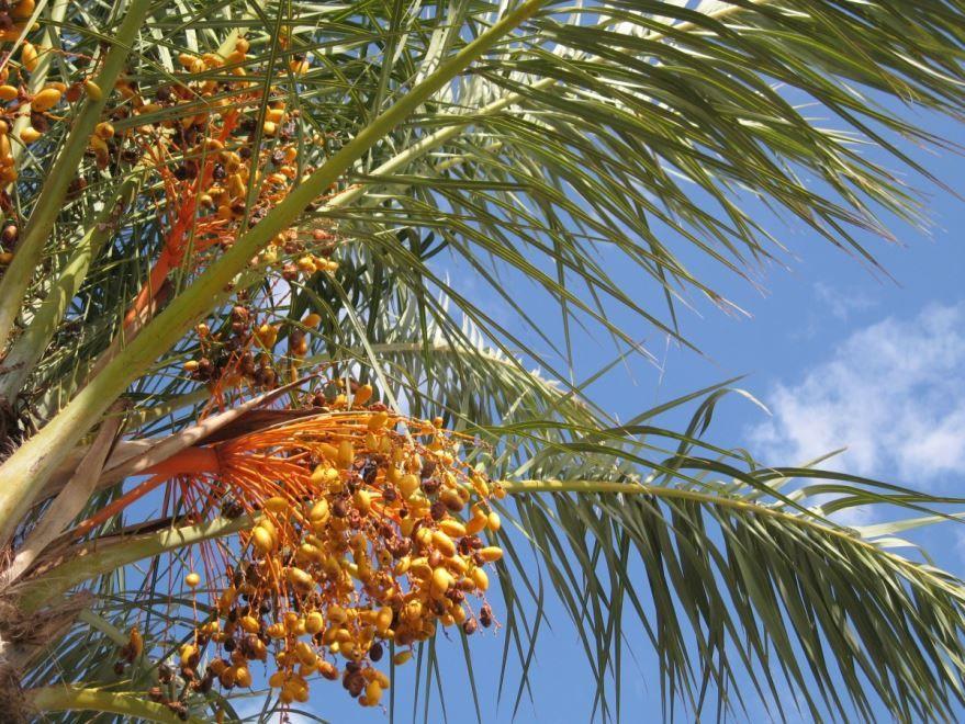 Смотреть фото и картинки пальм онлайн