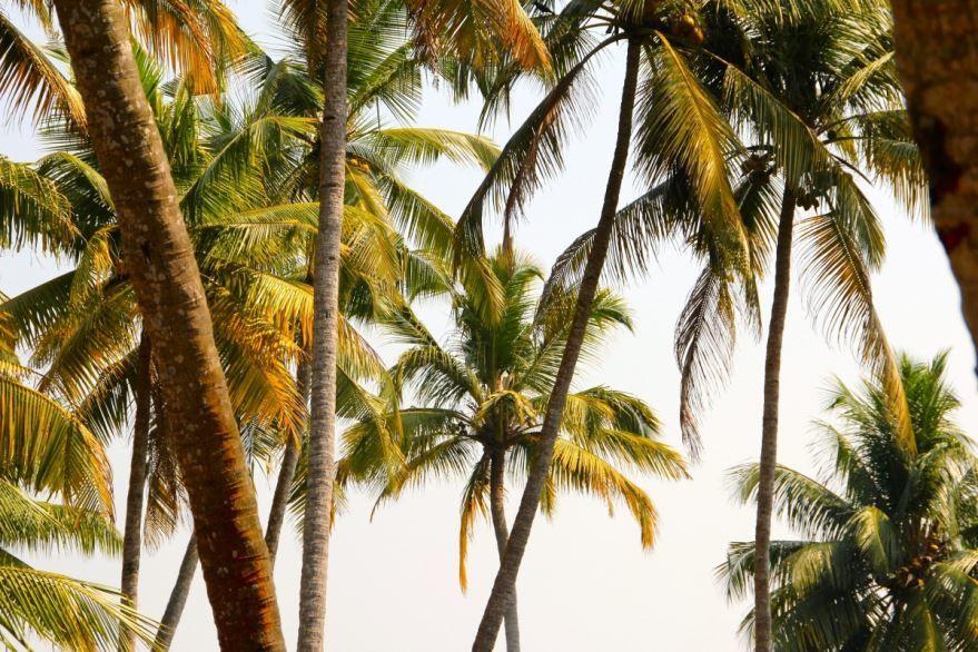 Смотреть фото комнатной пальмы