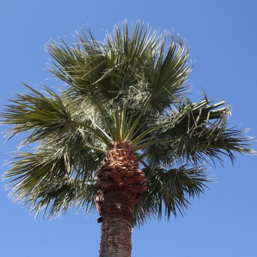 Онлайн фотографии пальмы для скачивания