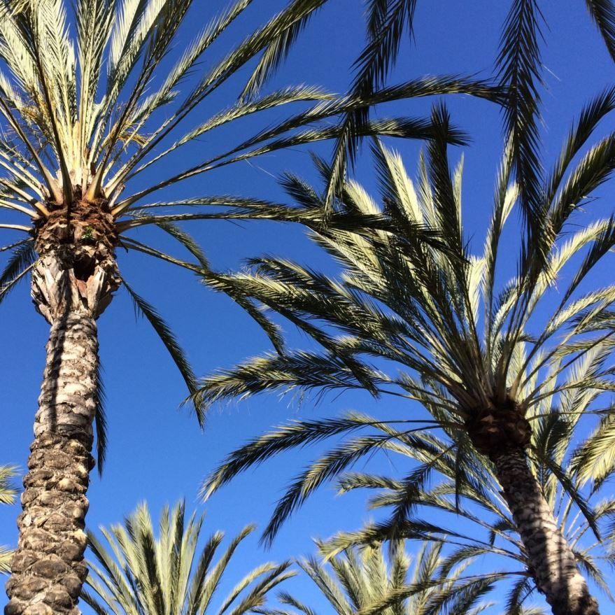 Скачать бесплатно картинки пальм