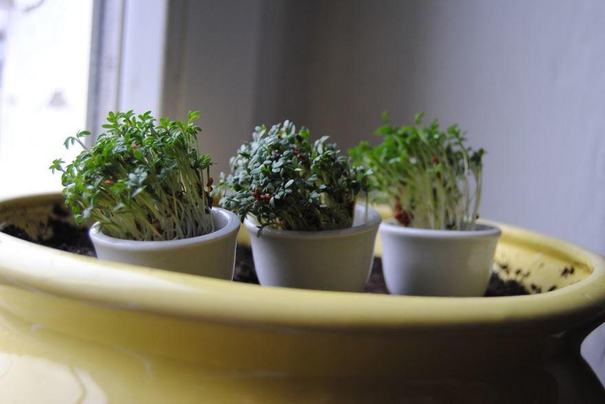 Фото цветущих комнатных растений