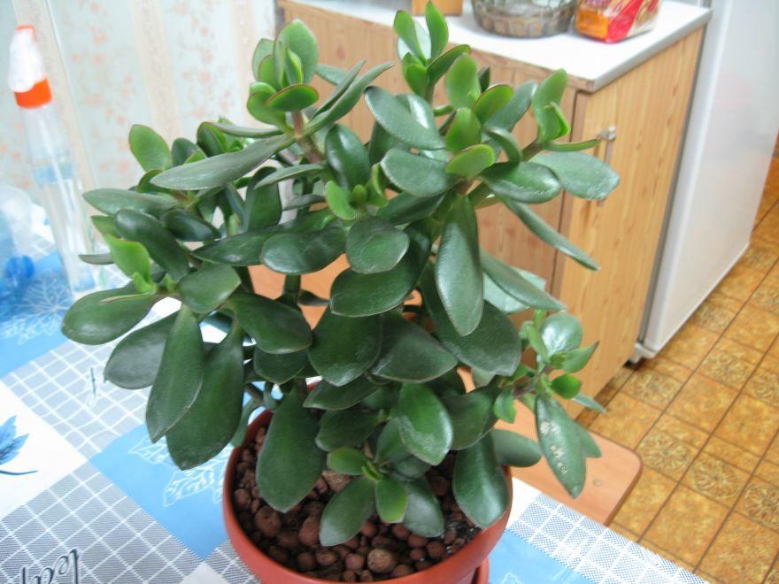 Домашние и комнатные растения бесплатно