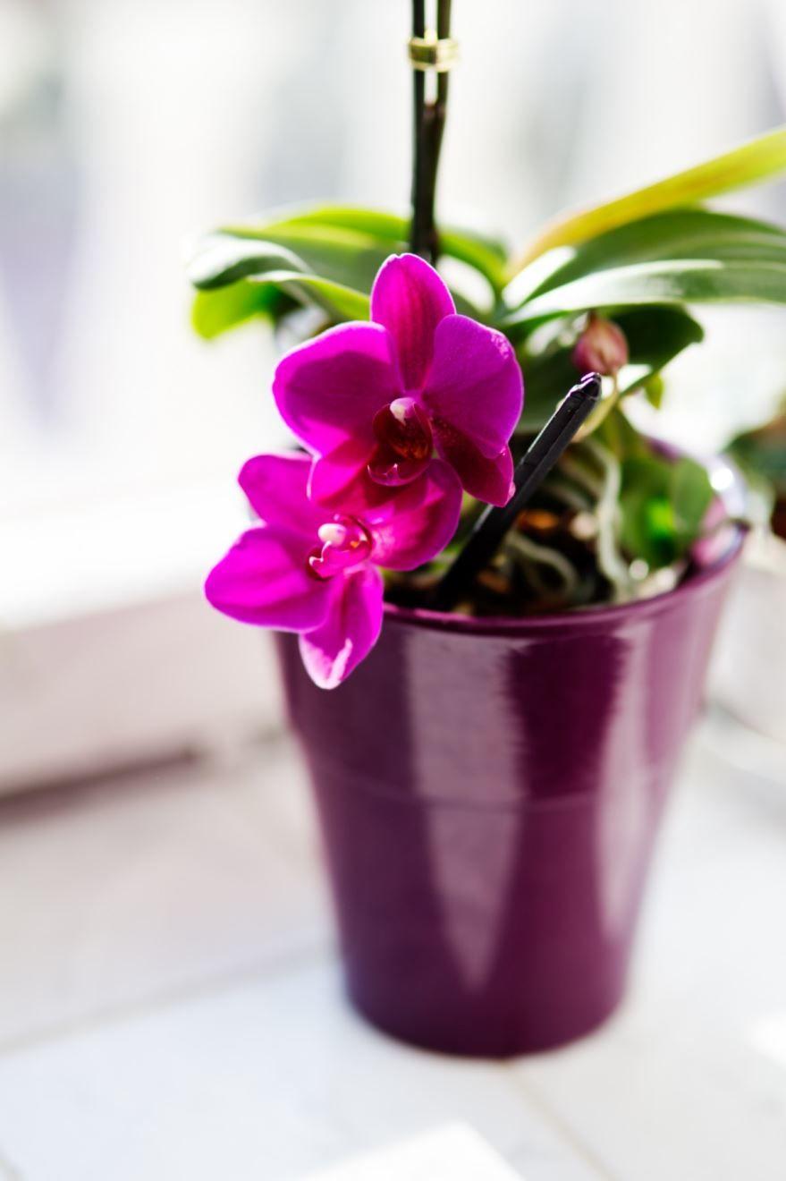Смотреть фото комнатных растений