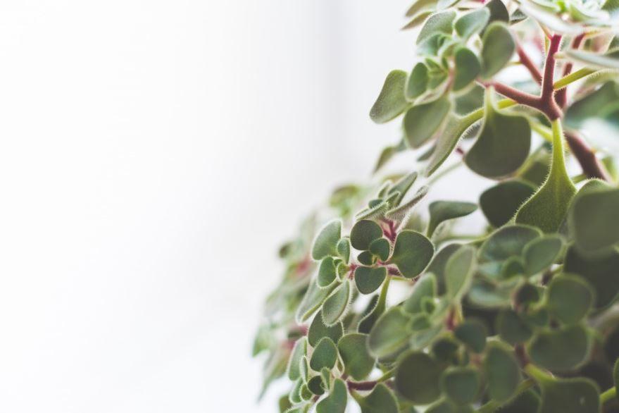 Цветущие комнатные растения 2019 года бесплатно