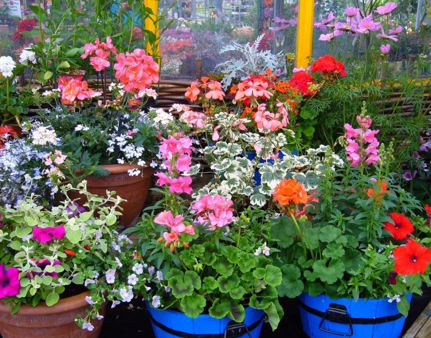 Смотреть фотографии садовых растений