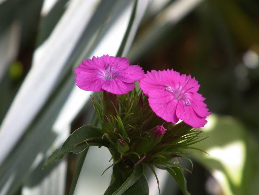Бесплатные фото садовых растений