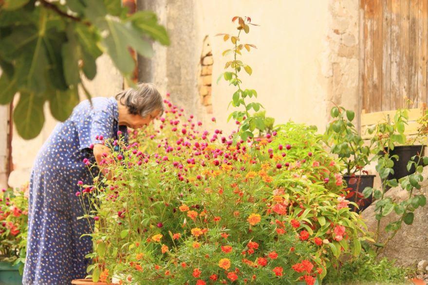 Купить фотографии садовых растений? Не нужно