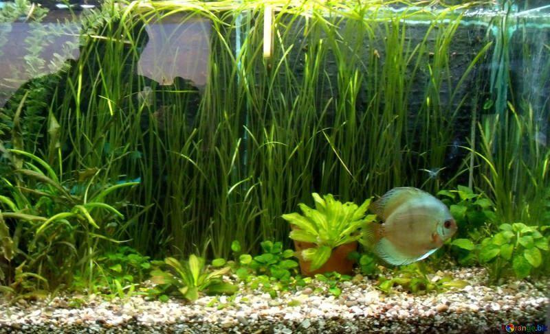 Купить фото аквариумных растений? Не нужно…