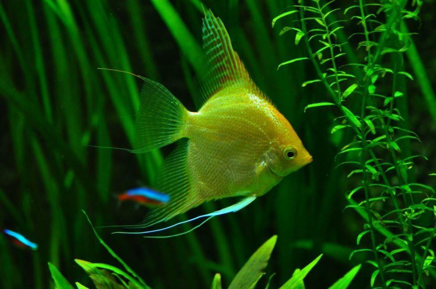 Растения-удобрения для аквариума