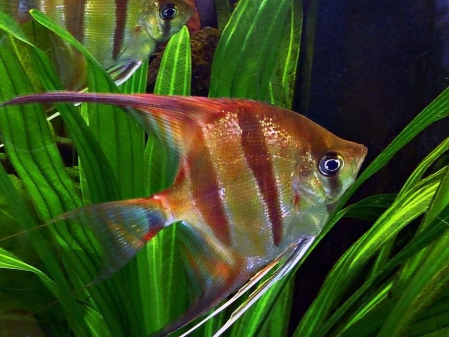 Фото аквариумных растений с интернета