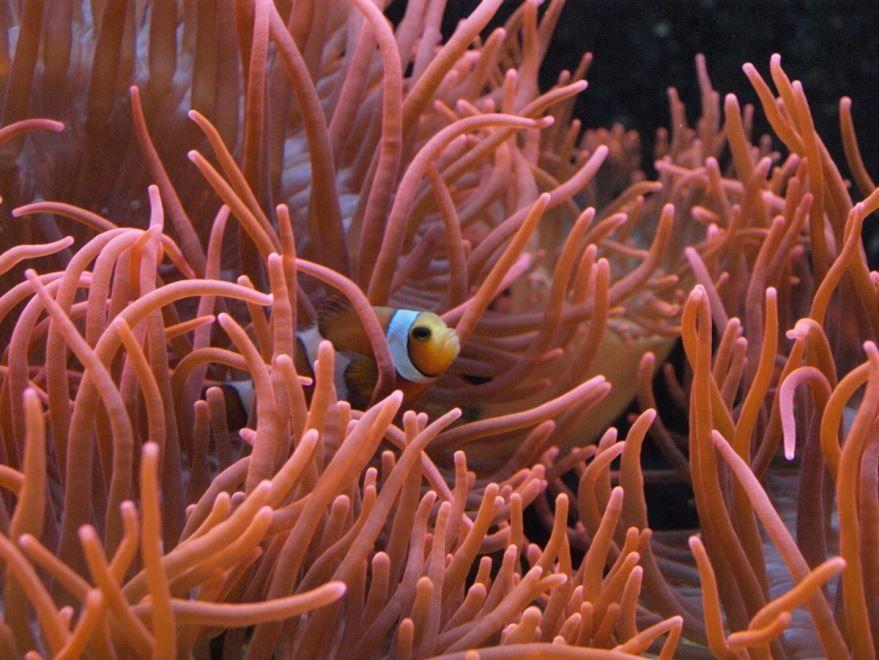 Фото аквариумных растений с описаниями