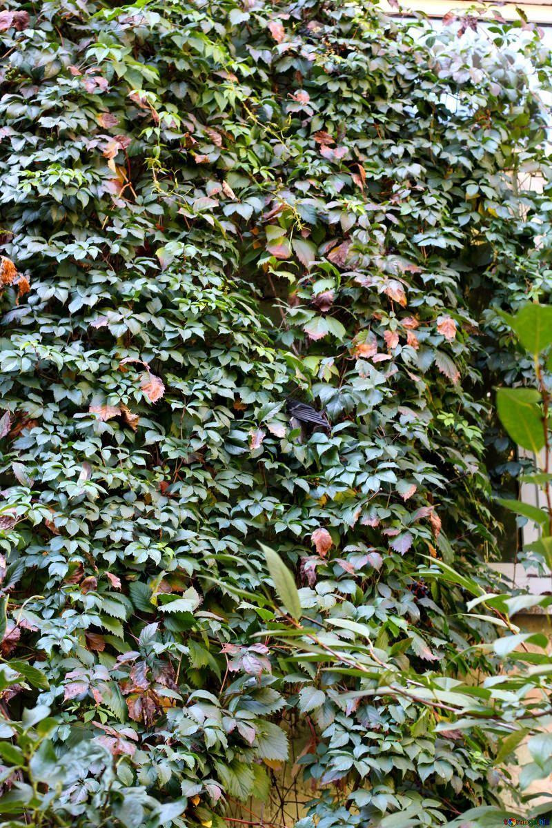 Фото декоративных растений для сада