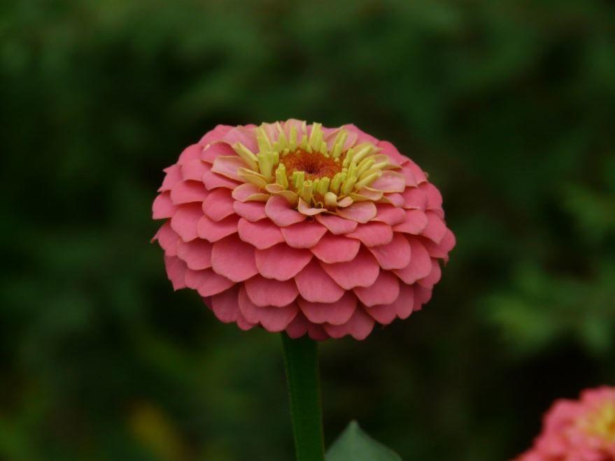 Красивые фотографии декоративных растений