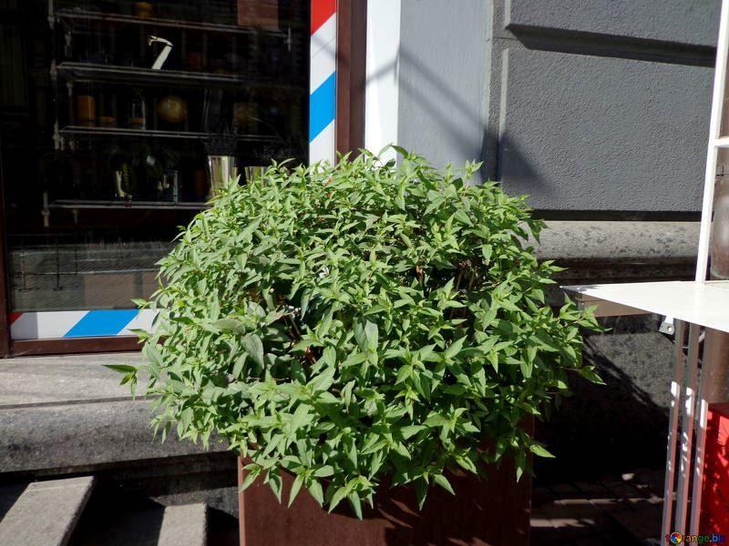 Декоративно-растущие, лиственные растения