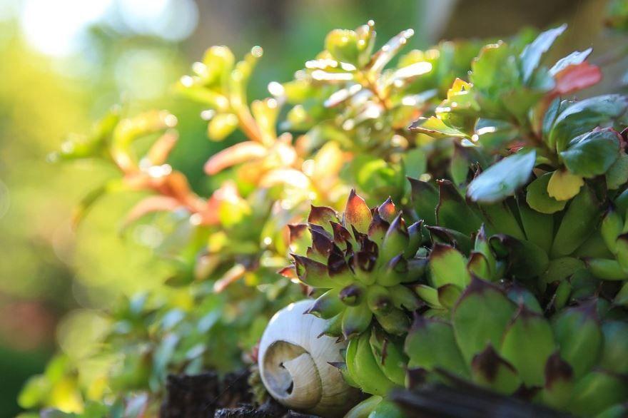 Декоративно-цветущие растения бесплатно