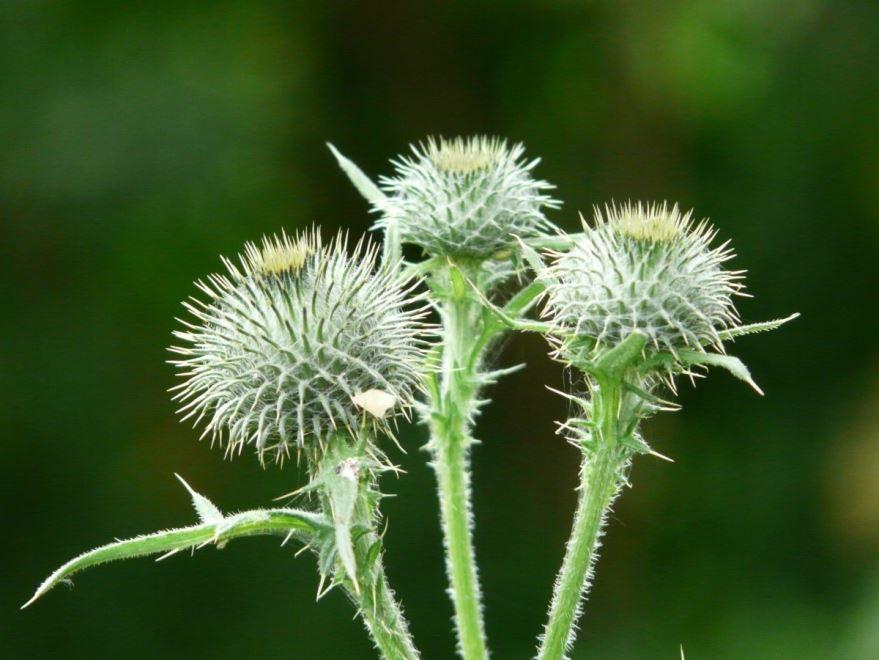 Фотографии ядовитых растений бесплатно