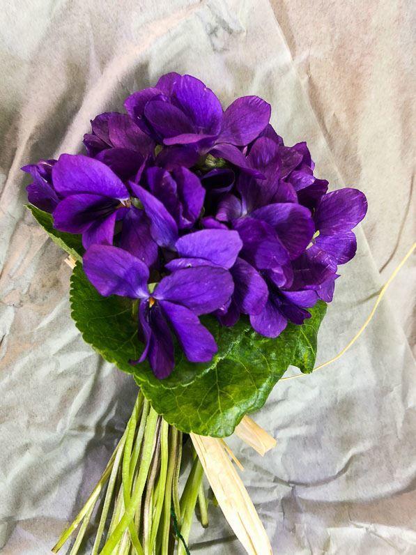 Смотреть фото цветка домашней фиалки бесплатно