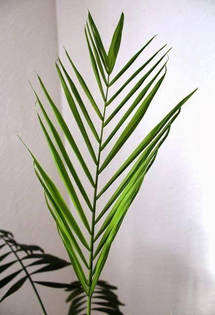 Картинки комнатной пальмы бесплатно