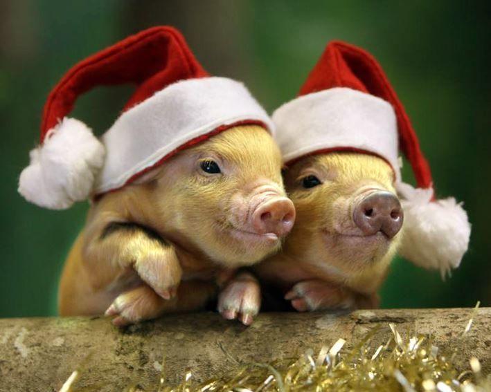 Новый год про животных