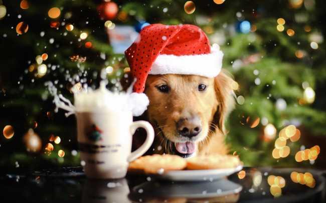 Картинки С Новым годом животные