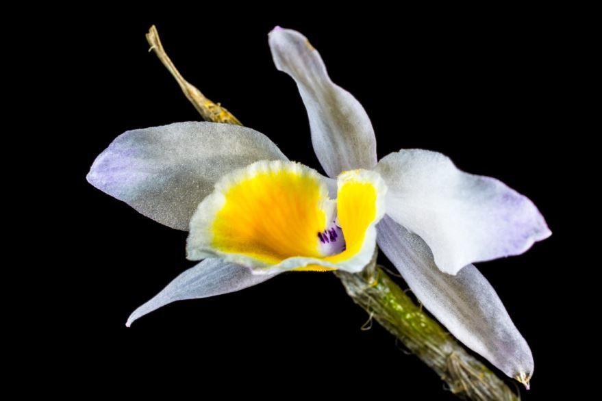 Картинки дикой орхидеи в хорошем качестве бесплатно