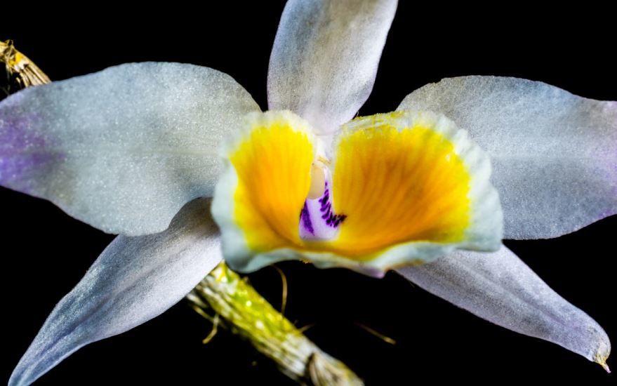 Бесплатное фотографии дикой орхидеи онлайн