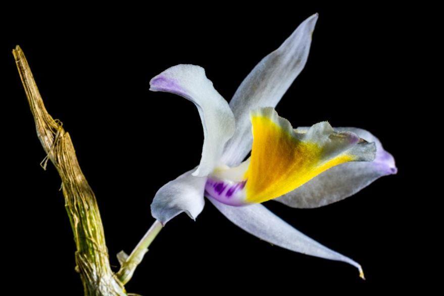 Смотреть фото дикой орхидеи бесплатно