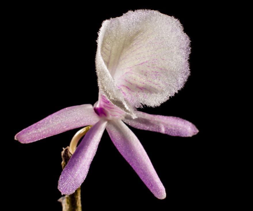 Лучшие фото дикой орхидеи в хорошем качестве
