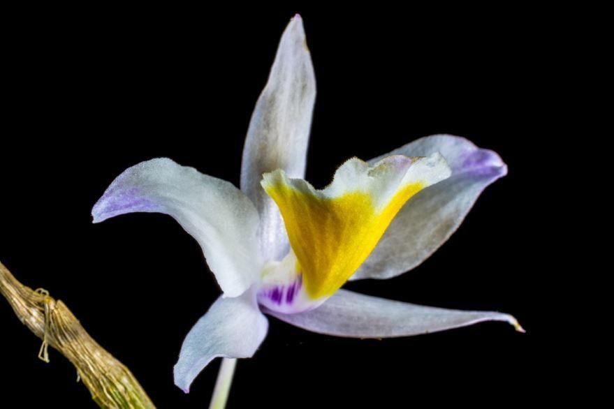 Скачать картинки дикой орхидеи бесплатно