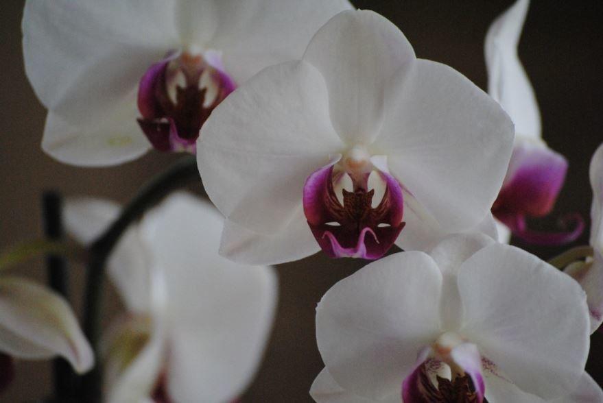 Купить фото белой орхидеи? Скачайте бесплатно!