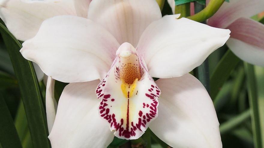 Скачать фото белой орхидеи 2019 года бесплатно