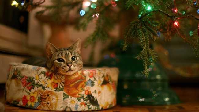 Лучший подарок под елку на Новый год