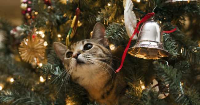Какие праздники отмечают в январе?